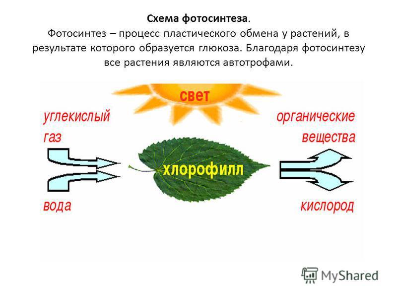 Схема фотосинтеза. Фотосинтез – процесс пластического обмена у растений, в результате которого образуется глюкоза. Благодаря фотосинтезу все растения являются автотрофами.