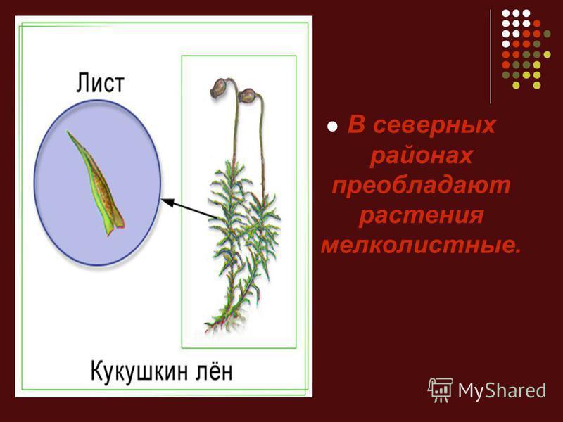 В северных районах преобладают растения мелколистные.