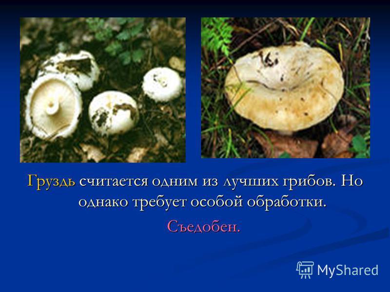 Груздь считается одним из лучших грибов. Но однако требует особой обработки. Съедобен.