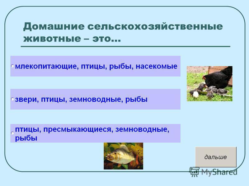 Домашние сельскохозяйственные животные – это…