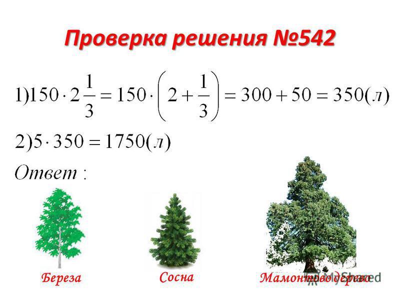 Проверка решения 542 Береза Сосна Мамонтово дерево