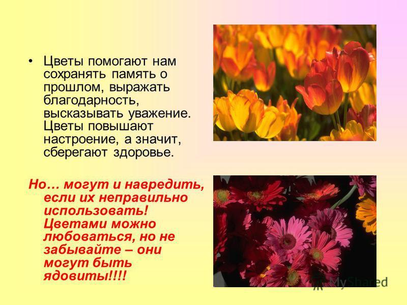 Цветы помогают нам сохранять память о прошлом, выражать благодарность, высказывать уважение. Цветы повышают настроение, а значит, сберегают здоровье. Но… могут и навредить, если их неправильно использовать! Цветами можно любоваться, но не забывайте –