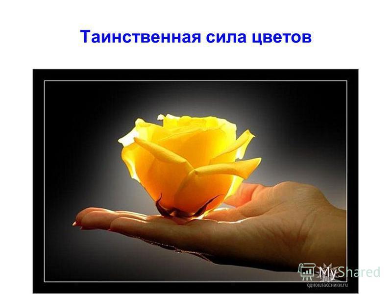 Таинственная сила цветов