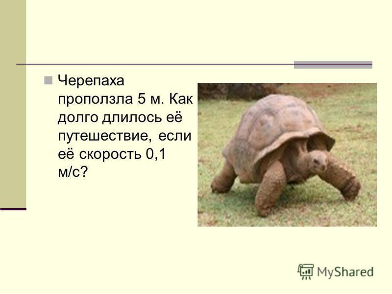 Черепаха проползла 5 м. Как долго длилось её путешествие, если её скорость 0,1 м/с?