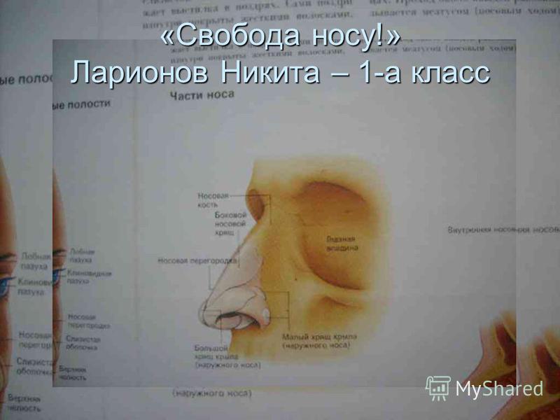 «Свобода носу!» Ларионов Никита – 1-а класс