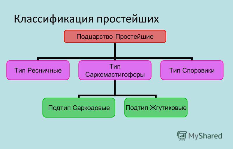 Классификация простейших Подцарство Простейшие Тип Ресничные Тип Саркомастигофоры Подтип Саркодовые Подтип Жгутиковые Тип Споровики