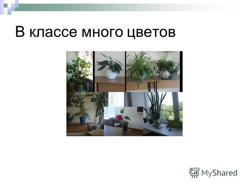 В классе много цветов