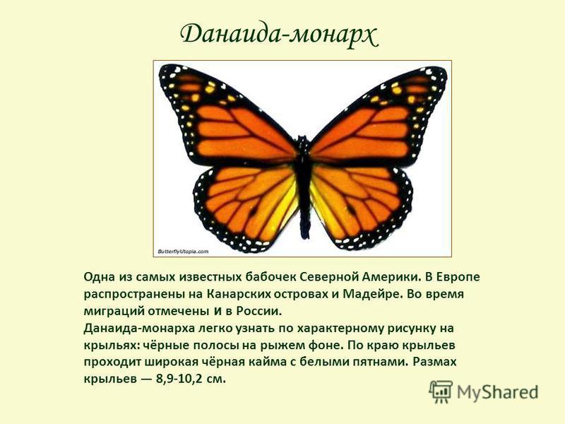 Данаида-монарх Одна из самых известных бабочек Северной Америки. В Европе распространены на Канарских островах и Мадейре. Во время миграций отмечены и в России. Данаида-монарха легко узнать по характерному рисунку на крыльях: чёрные полосы на рыжем ф