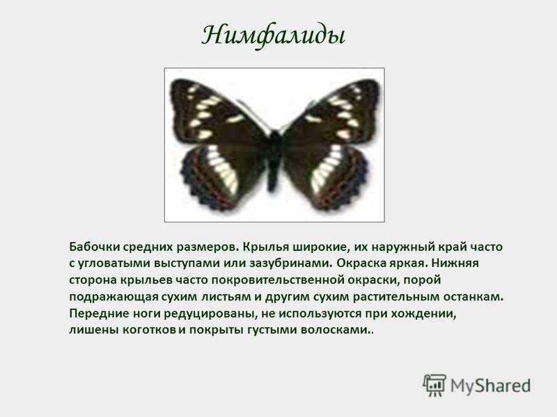 Нимфалиды Бабочки средних размеров. Крылья широкие, их наружный край часто с угловатыми выступами или зазубринами. Окраска яркая. Нижняя сторона крыльев часто покровительственной окраски, порой подражающая сухим листьям и другим сухим растительным ос