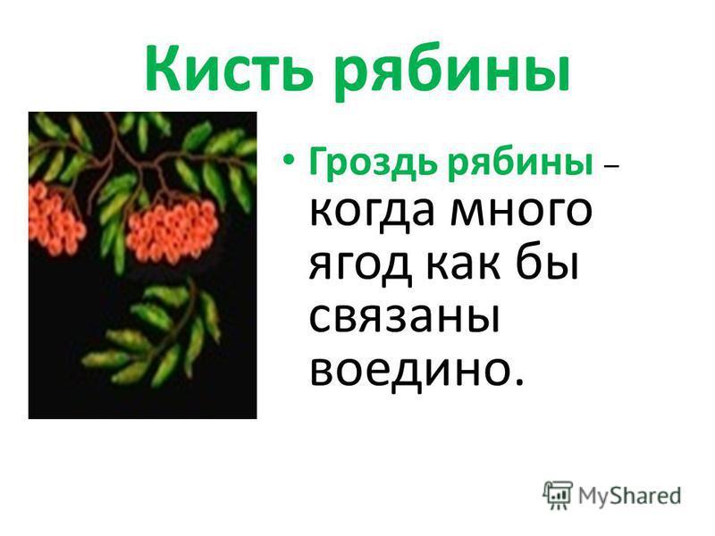 Кисть рябины Гроздь рябины – когда много ягод как бы связаны воедино.