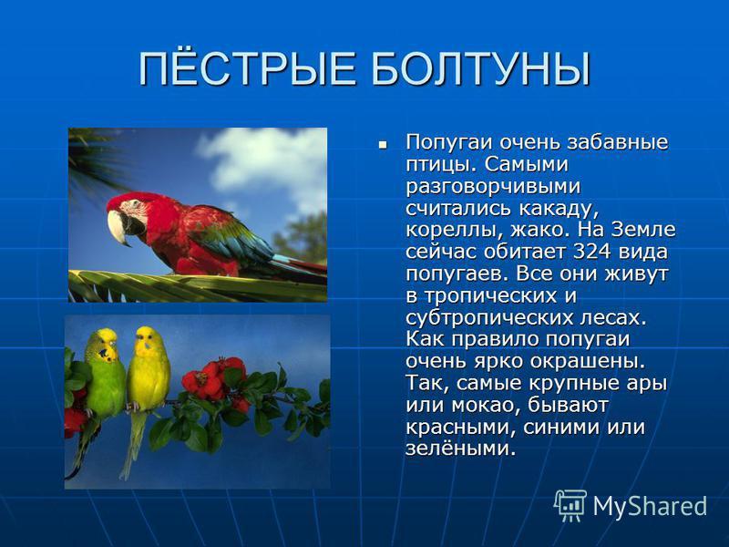 ПЁСТРЫЕ БОЛТУНЫ Попугаи очень забавные птицы. Самыми разговорчивыми считались какаду, корелы, жако. На Земле сейчас обитает 324 вида попугаев. Все они живут в тропических и субтропических лесах. Как правило попугаи очень ярко окрашены. Так, самые кру
