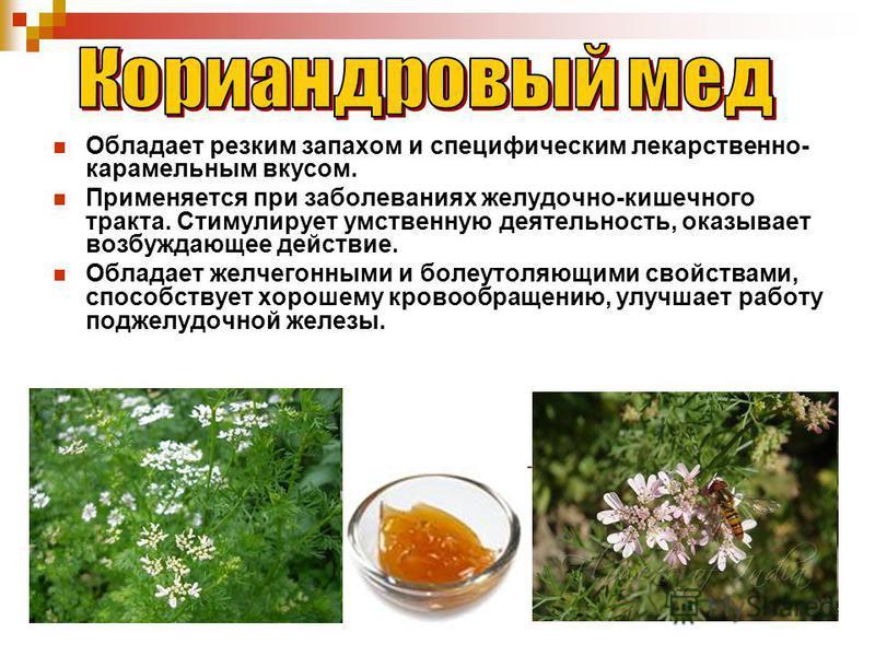 Обладает резким запахом и специфическим лекарственно- карамельным вкусом. Применяется при заболеваниях желудочно-кишечного тракта. Стимулирует умственную деятельность, оказывает возбуждающее действие. Обладает желчегонными и болеутоляющими свойствами