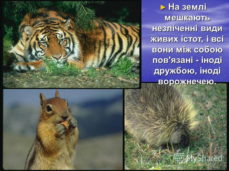 На землі мешкають незліченні види живих істот, і всі вони між собою пов'язані - іноді дружбою, іноді ворожнечею. На землі мешкають незліченні види живих істот, і всі вони між собою пов'язані - іноді дружбою, іноді ворожнечею.