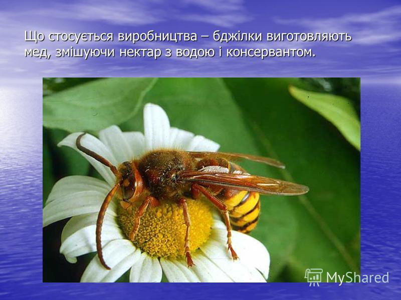 Що стосується виробництва – бджілки виготовляють мед, змішуючи нектар з водою і консервантом.