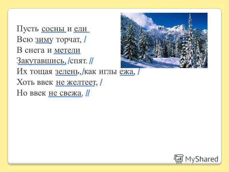Пусть сосны и ели Всю зиму торчат, В снега и метели Закутавшись, спят. Их тощая зелень, как иглы ежа, Хоть ввек не желтеет, Но ввек не свежа.