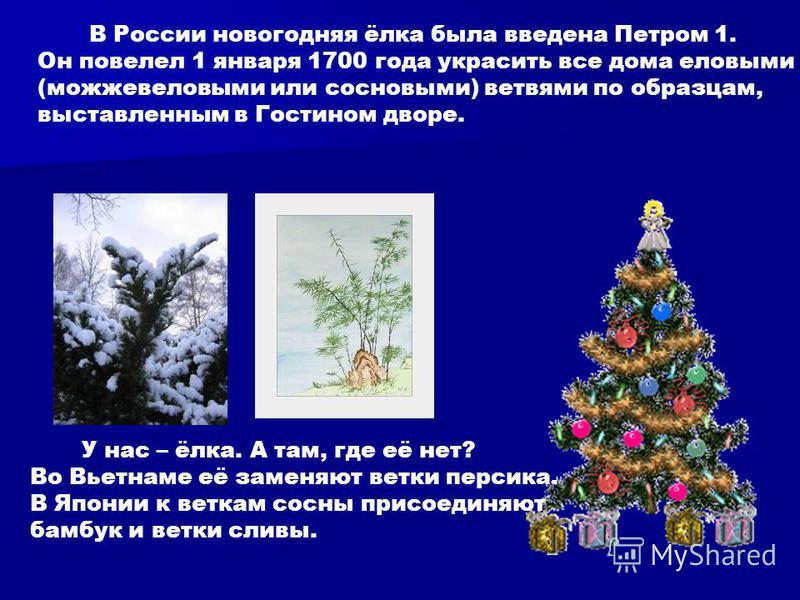В России новогодняя ёлка была введена Петром 1. Он повелел 1 января 1700 года украсить все дома еловыми (можжевеловыми или сосновыми) ветвями по образцам, выставленным в Гостином дворе. У нас – ёлка. А там, где её нет? Во Вьетнаме её заменяют ветки п