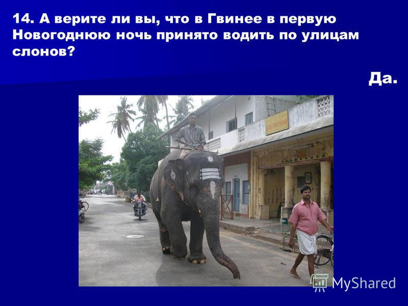 14. А верите ли вы, что в Гвинее в первую Новогоднюю ночь принято водить по улицам слонов? Да.
