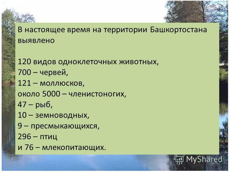 В настоящее время на территории Башкортостана выявлено 120 видов одноклеточных животных, 700 – червей, 121 – моллюсков, около 5000 – членистоногих, 47 – рыб, 10 – земноводных, 9 – пресмыкающихся, 296 – птиц и 76 – млекопитающих.