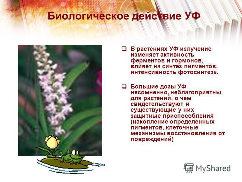 Биологическое действие УФ В растениях УФ излучение изменяет активность ферментов и гормонов, влияет на синтез пигментов, интенсивность фотосинтеза. Большие дозы УФ несомненно, неблагоприятны для растений, о чем свидетельствуют и существующие у них за