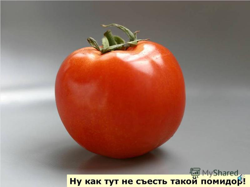 Красный помидор на кустах