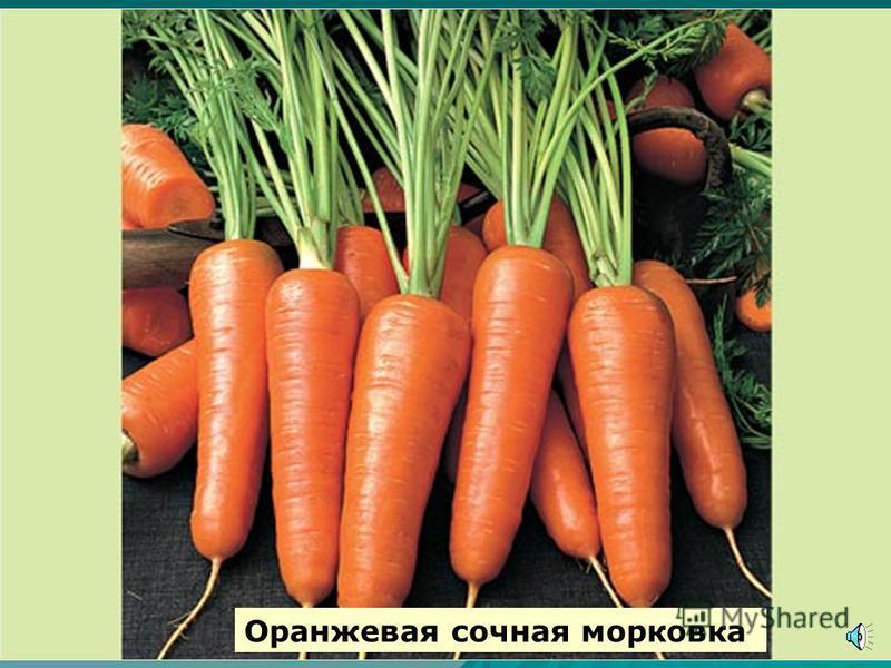 Так растет морковь