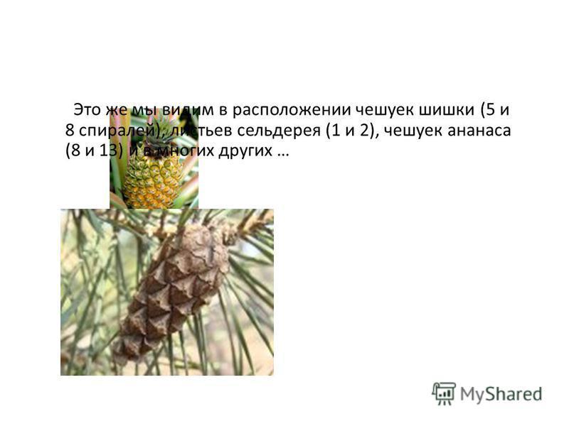 Это же мы видим в расположении чешуек шишки (5 и 8 спиралей), листьев сельдерея (1 и 2), чешуек ананаса (8 и 13) и в многих других …