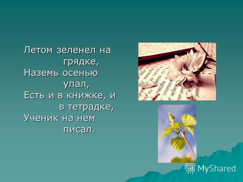 Летом зеленел на грядке, Наземь осенью упал, Есть и в книжке, и в тетрадке, Ученик на нем писал.