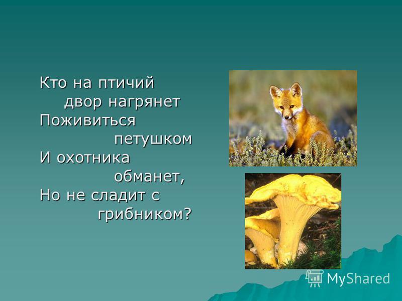 Кто на птичий двор нагрянет Поживиться петушком И охотника обманет, Но не сладит с грибником?