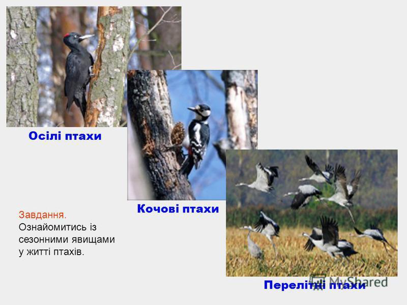 Осілі птахи Кочові птахи Перелітні птахи Завдання. Ознайомитись із сезонними явищами у житті птахів.