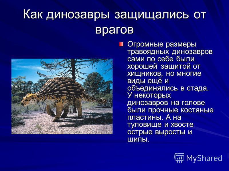 Как динозавры защищались от врагов Огромные размеры травоядных динозавров сами по себе были хорошей защитой от хищников, но многие виды ещё и объединялись в стада. У некоторых динозавров на голове были прочные костяные пластины. А на туловище и хвост