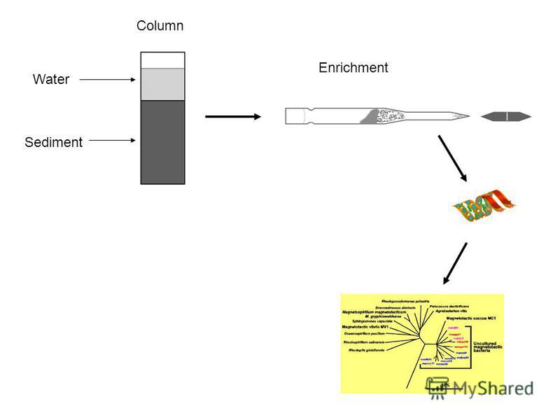 Water Sediment Column Enrichment