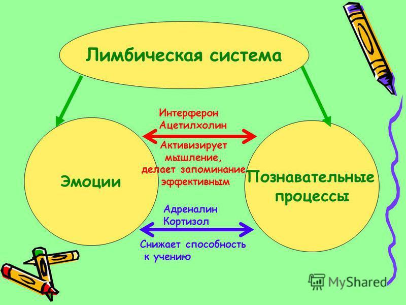 Лимбическая система Эмоции Познавательные процессы Интерферон Ацетилхолин Адреналин Кортизол Снижает способность к учению Активизирует мышление, делает запоминание эффективным