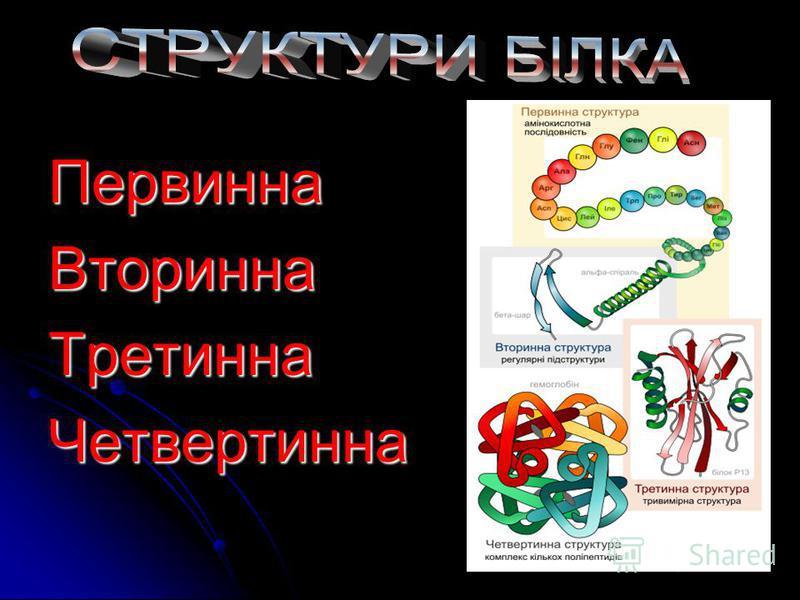 Описав О.Я. Данилевський (1880 р.): Описав О.Я. Данилевський (1880 р.):