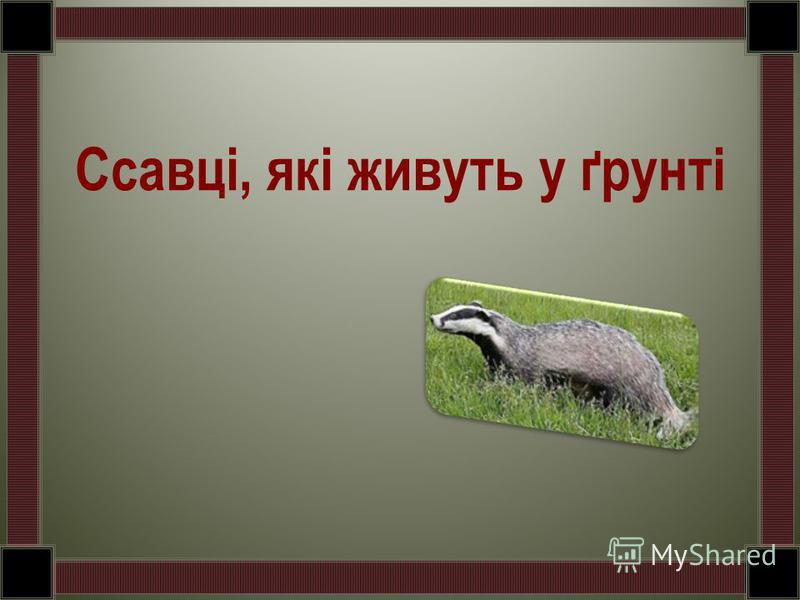 Ссавці, які живуть у ґрунті