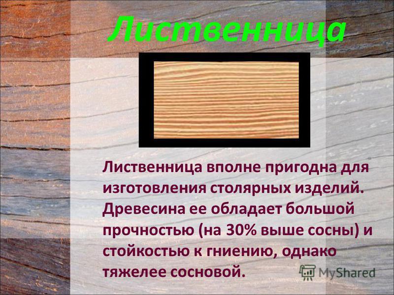 Лиственница вполне пригодна для изготовления столярных изделий. Древесина ее обладает большой прочностью (на 30% выше сосны) и стойкостью к гниению, однако тяжелее сосновой. Лиственница