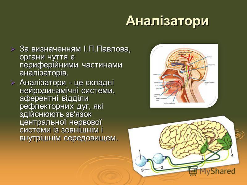 За визначенням І.П.Павлова, органи чуття є периферійними частинами аналізаторів. За визначенням І.П.Павлова, органи чуття є периферійними частинами аналізаторів. Аналізатори - це складні нейродинамічні системи, аферентні відділи рефлекторних дуг, які