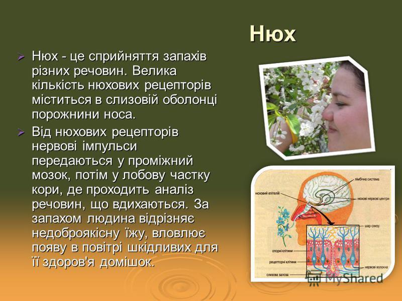 Нюх - це сприйняття запахів різних речовин. Велика кількість нюхових рецепторів міститься в слизовій оболонці порожнини носа. Нюх - це сприйняття запахів різних речовин. Велика кількість нюхових рецепторів міститься в слизовій оболонці порожнини носа
