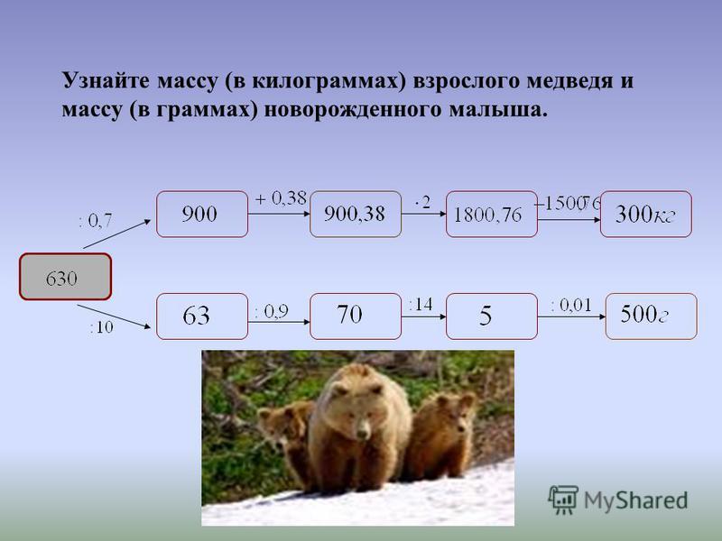 Узнайте массу (в килограммах) взрослого медведя и массу (в граммах) новорожденного малыша.