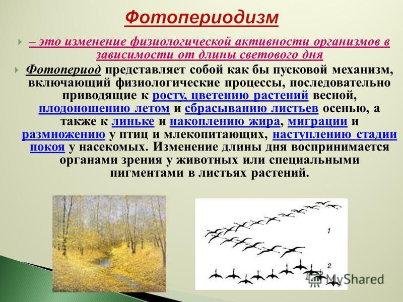 – это изменение физиологической активности организмов в зависимости от длины светового дня Фотопериод представляет собой как бы пусковой механизм, включающий физиологические процессы, последовательно приводящие к росту, цветению растений весной, плод