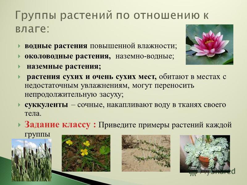 водные растения повышенной влажности; околоводные растения, наземно-водные; наземные растения; растения сухих и очень сухих мест, обитают в местах с недостаточным увлажнениям, могут переносить непродолжительную засуху; суккуленты – сочные, накапливаю