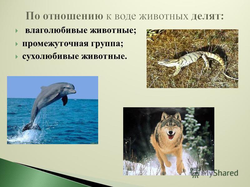 влаголюбивые животные; промежуточная группа; сухолюбивые животные.