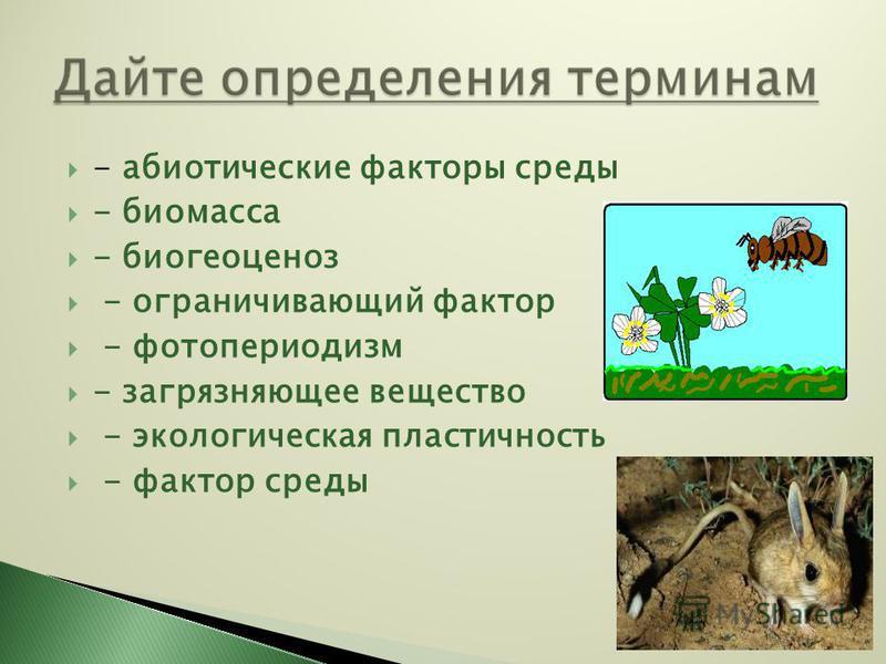 - абиотические факторы среды - биомасса - биогеоценоз - ограничивающий фактор - фотопериодизм - загрязняющее вещество - экологическая пластичность - фактор среды