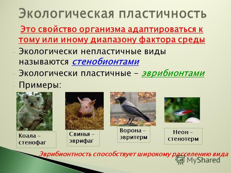 Это свойство организма адаптироваться к тому или иному диапазону фактора среды - Экологически непластичные виды называются стенобионтами - Экологически пластичные - эврибионтами - Примеры: Коала - стенофаг Свинья - эврифаг Эврибионтность способствует
