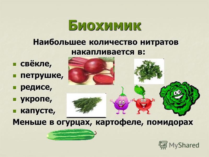 Биохимик Наибольшее количество нитратов накапливается в: Наибольшее количество нитратов накапливается в: свёкле, свёкле, петрушке, петрушке, редисе, редисе, укропе, укропе, капусте, капусте, Меньше в огурцах, картофеле, помидорах