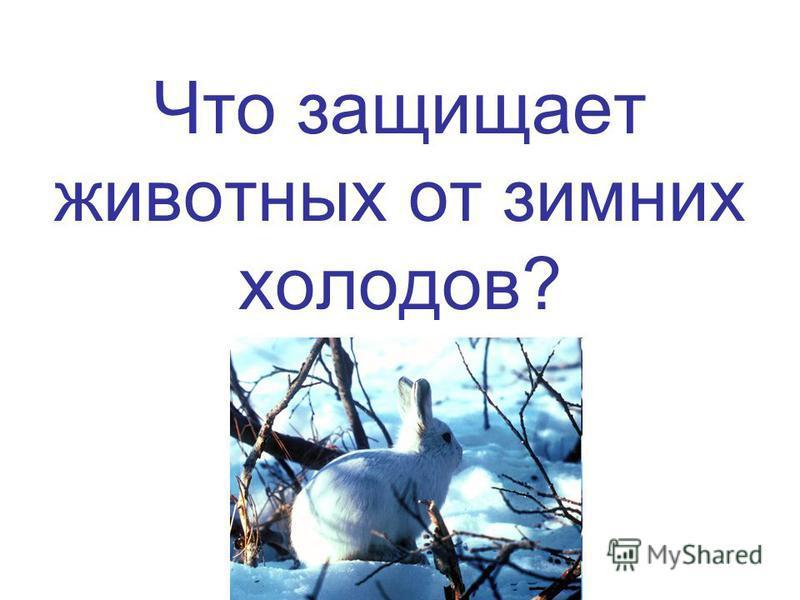 Что защищает животных от зимних холодов?