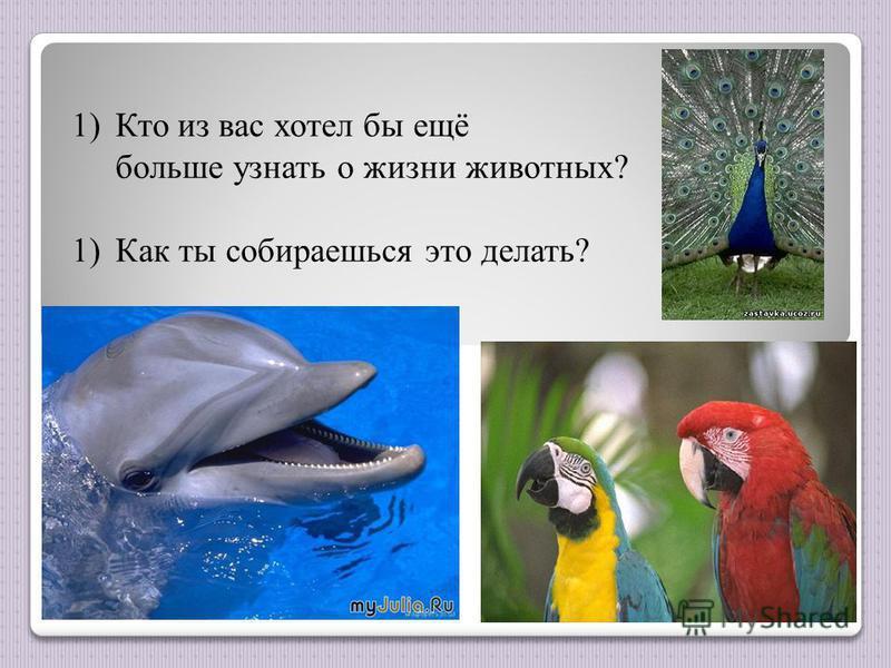 1)Кто из вас хотел бы ещё больше узнать о жизни животных? 1)Как ты собираешься это делать?