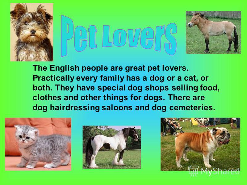 The English people are great pet lovers. Practically every family has a dog or a cat, or both. They have special dog shops selling food, clothes and other things for dogs. There are dog hairdressing saloons and dog cemeteries.