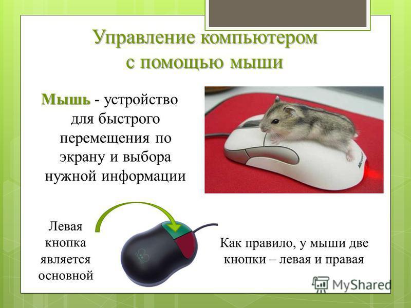 Управление компьютером с помощью мыши Мышь Мышь - устройство для быстрого перемещения по экрану и выбора нужной информации Как правило, у мыши две кнопки – левая и правая Левая кнопка является основной