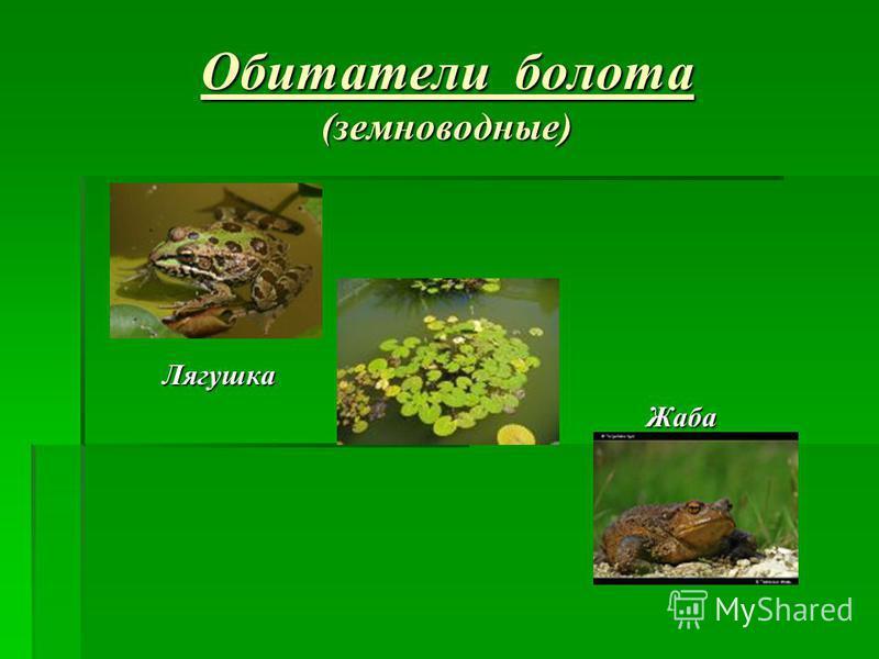 Обитатели болота (земноводные) Лягушка Лягушка Жаба Жаба