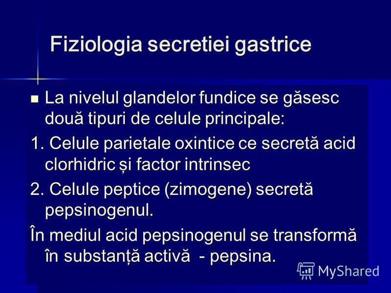 Fiziologia secretiei gastrice La nivelul glandelor fundice se găsesc două tipuri de celule principale: La nivelul glandelor fundice se găsesc două tipuri de celule principale: 1. Celule parietale oxintice ce secretă acid clorhidric şi factor intrinse